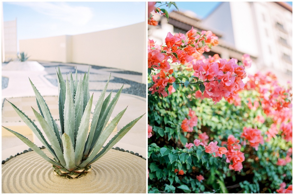 agave plant and bougainvillea